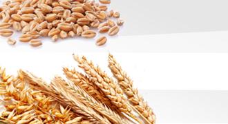Хлібні зернові культури